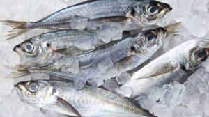 pesce surgelato 300x168