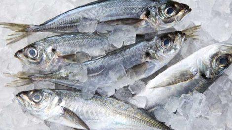 pesce surgelato 470x264
