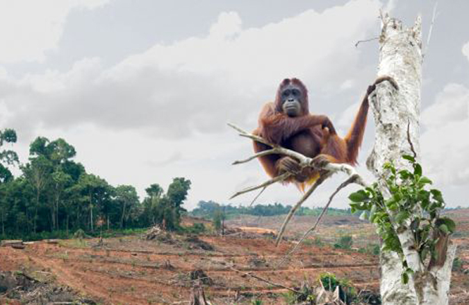 orango-oliodipalma-grande