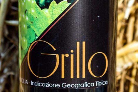grillo 470x313