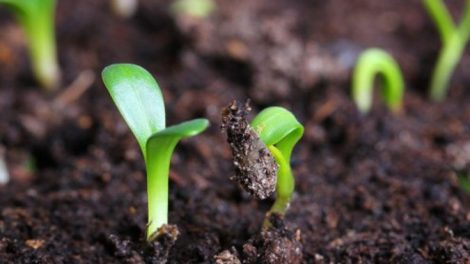 agricoltura-bio-riscaldamento-globale-grande-470x264