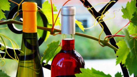 vino-bio-ant-470x264