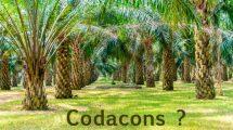 codacons.ant_-215x120