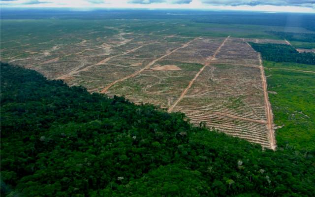 deforestazione peru