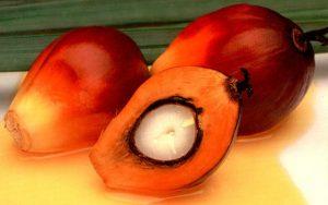 palm oil 300x188