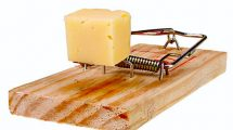 cheese-scam-215x120