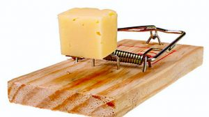 cheese-scam-300x168