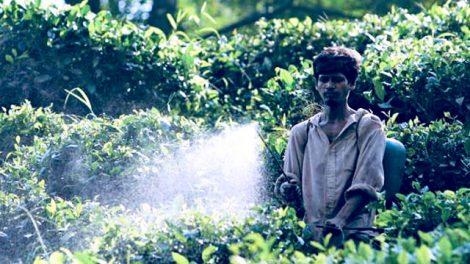 the-pesticidi-470x264