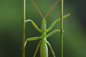 insetti 300x200
