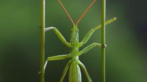 insetti-470x264