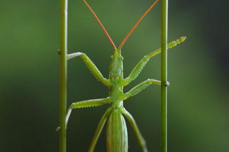 insetti 470x313