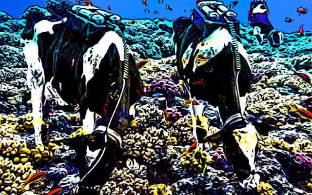 alghe mucche