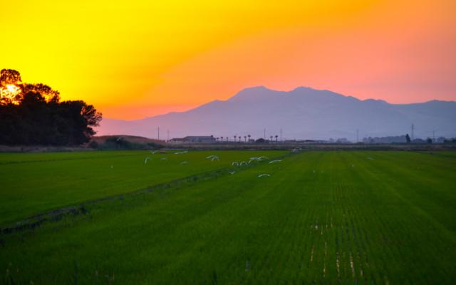 riso sicilia