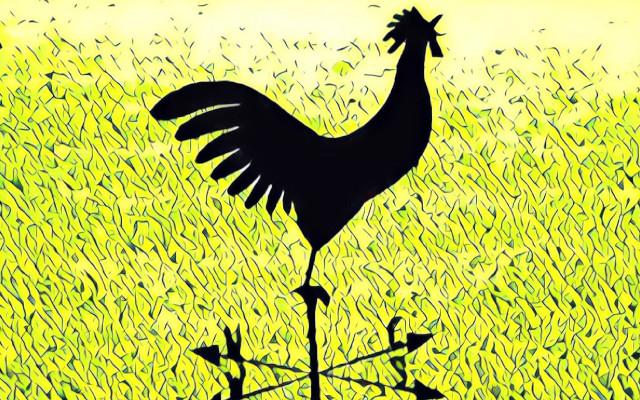 pollo a terra