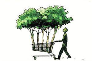 riforestazione